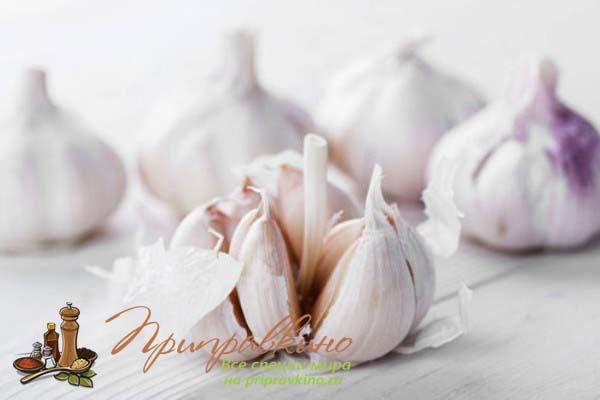 Отрадненский – среднепоздний сорт озимого чеснока